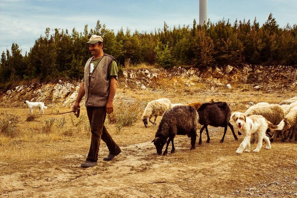 Pasáček ovcí
