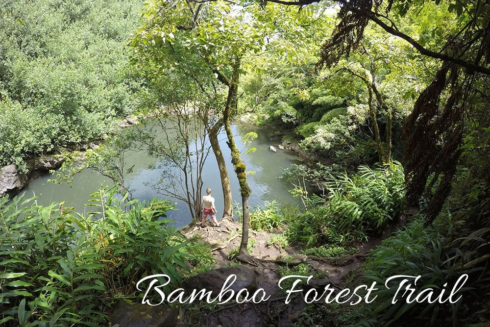 bamboo forest trail hawaii maui