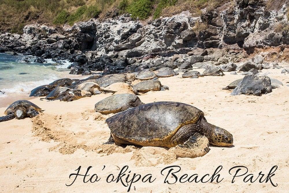 hookipa beach park maui hawaii