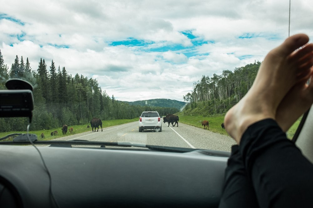 cesta na aljasku