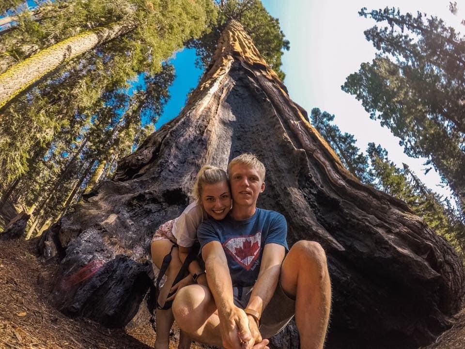 Poznali byste, že to není největší strom v Sequoia parku?