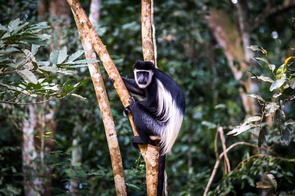 Cesta do Murchinson Falls National Parku je příšerná, ale ne nudná. Celou dobu kolem vás skáčou opice.