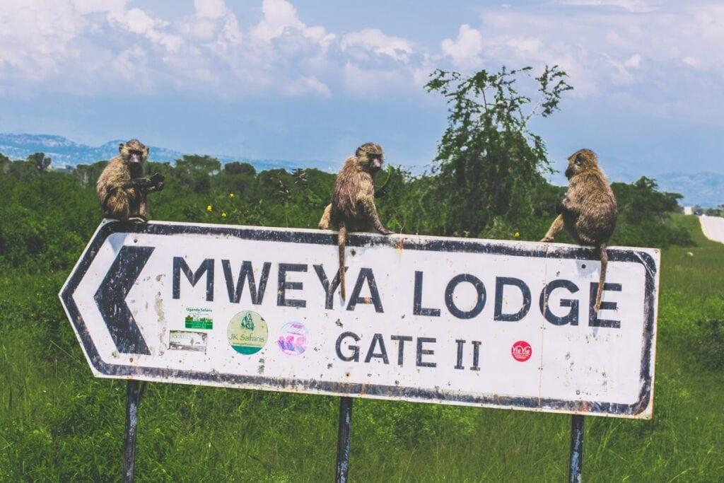 Pozorovat opice byla jedna z našich nejoblíbenějších aktivit