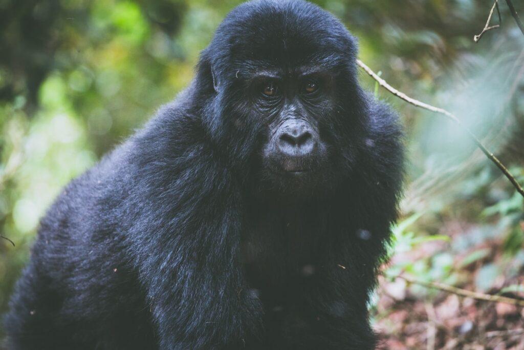 Z Queen Elisabeth National Parku jsme vyrazili do Bwindi National Parku na gorily
